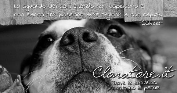 Lo sguardo dei cani quando non capiscono e non sanno che possono aver ragione a non capire.  - Italo Calvino