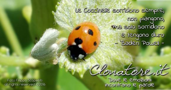"""""""Le Coccinelle sorridono sempre, e se si trovano in difficoltà, nel dolore, nei guai o in pericolo, non piangono, ma solo sorridono e tengono duro"""".  - Robert Baden-Powell"""